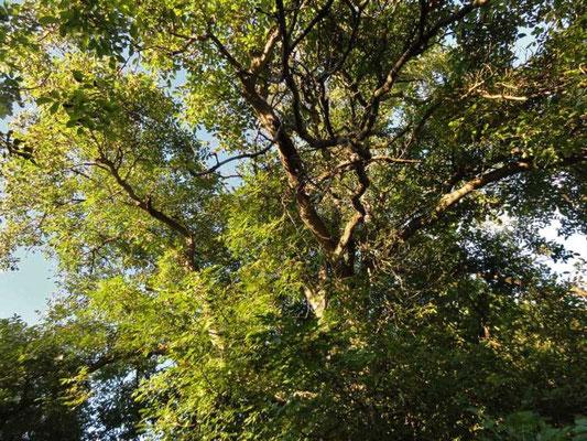 die Baum- und Pflanzenwesen leuchten in der untergehenden Sonne