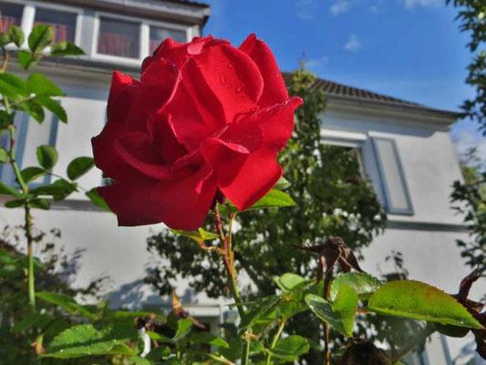 die Blume der Liebe