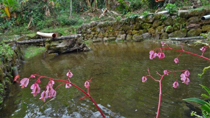 Blütenpracht im Urwald