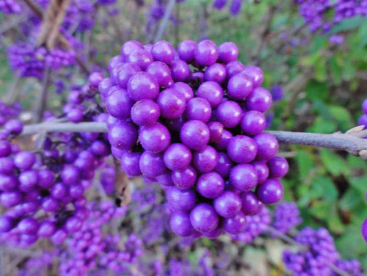 die prachtvolle Fülle der Natur mit ihren wunderschönen Farben und Früchten des Herbstes