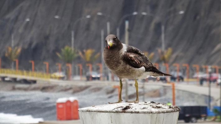 Ankunft in Lima und erster Kontakt mit dem Pazifik