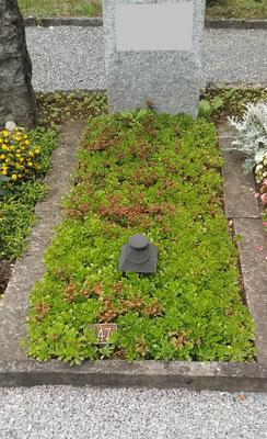 Dauergrab einfach (Sedum grob)