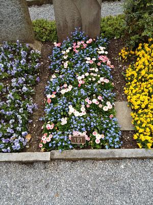 Frühling, Myosotis und Bellis gemischt