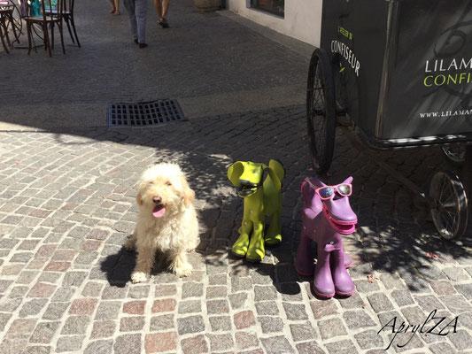 SPDM (Serendipitous Photographic Dog Moment)