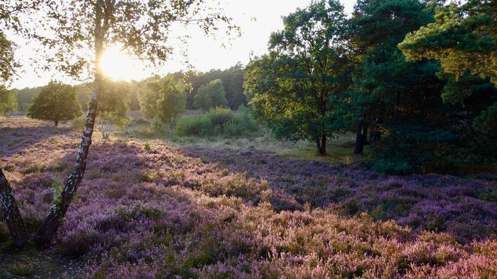 Abendstimmung Behringer Heide