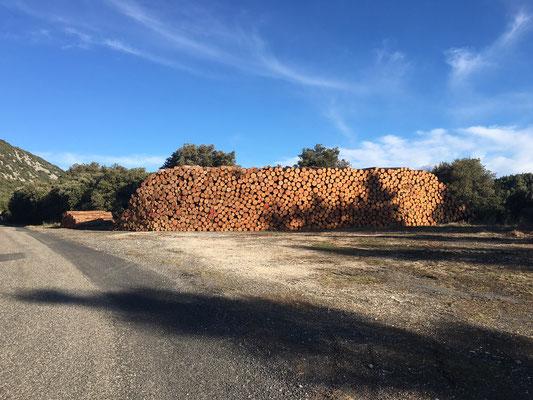 Coupes de bois le long de la route vers Prugnanes en décembre 2020 (photo Dominique Boyer)