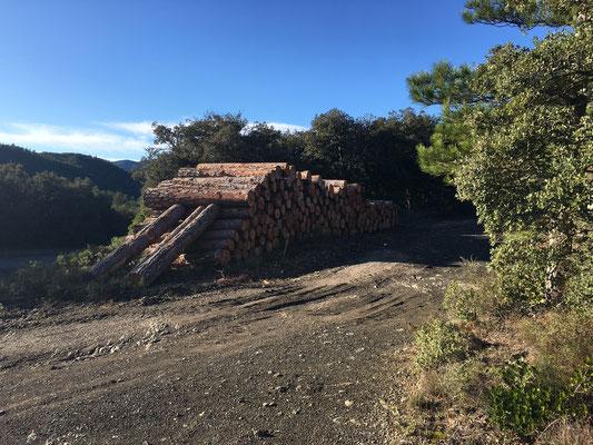 Coupes de bois sur le sentier cathare  en décembre 2020 (photo Dominique Boyer)