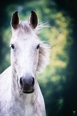 "feenpferd | 201607 www.visovio.de  ""let a horse whisper in your ear and breathe on your heart. you will never regret it."" ; fluffyunicornsdancingonrainbows"