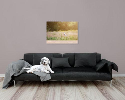 VISOVIO English Setter - Impressionen edler Hunde >>> Bestellbar bei jedem regionalen Buchhändler und diversen Online-Plattformen ||| english setter, geschenkidee, setter kalender, visovio, fineart