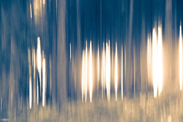 lichtspiel | 201309  • www.visovio.de • | möhnesee, waldsonne