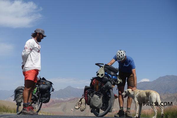Ein Hund der Berühmtheit erlangte...Sarah (unser Name) hat einige Radgruppen begleitet über huderte von Kilometern...