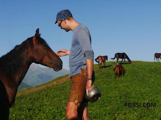 Am nächsten Morgen Besuch von Pferden