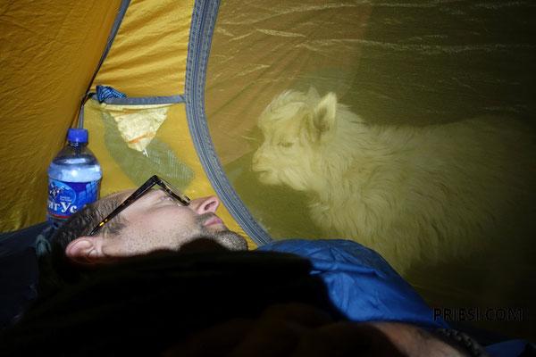 würden aber trotzdem gerne ins Zelt kommen