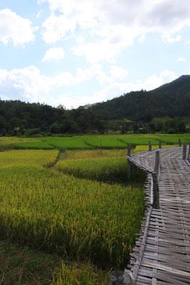 bamboo-bridge-over-ricefields