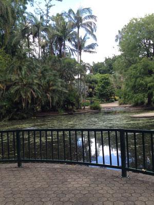botanical-garden-brisbane