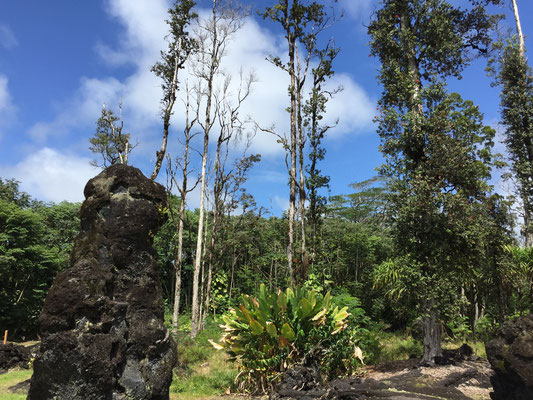 lava-tree-big-island