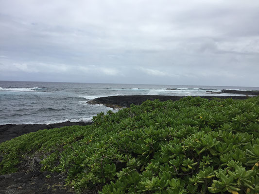 punaluu-black-sand-beach