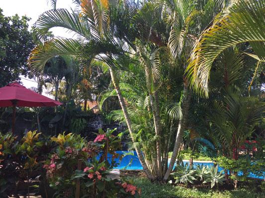 pool-klumpu-bali-resort
