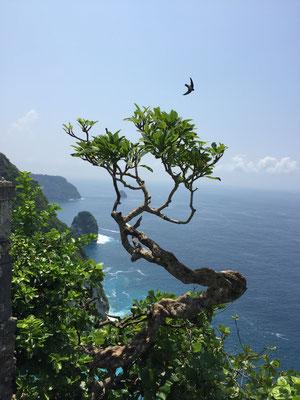 kelingking-beach-view-point