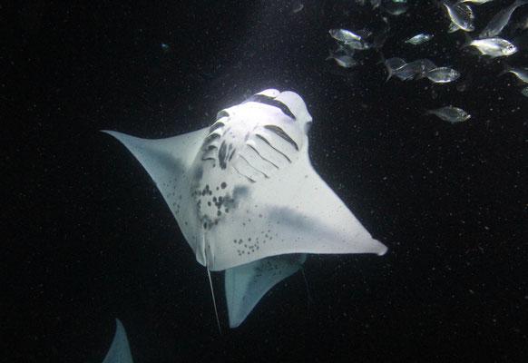 manta-rochen-ausflug