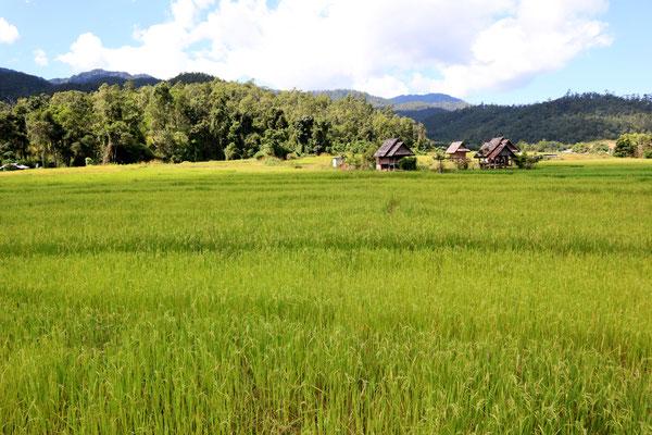 aussicht-von-der-bambus-brücke