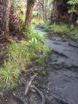 crater-rim-trail-kilauea-iki-overlook