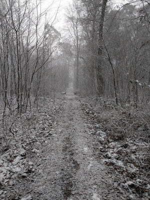 Der Waldweg mit Schnee