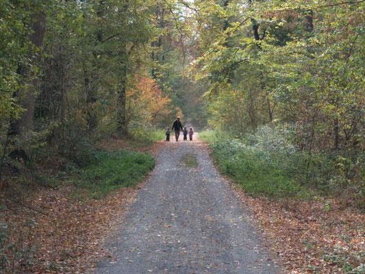 Rückweg vom Waldkindergarten