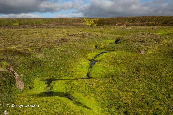 knallgrünes islandmoos