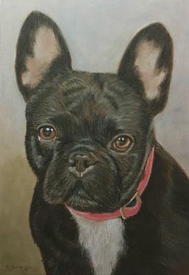 """""""Französische Bulldogge Pumba"""" Pastell auf Tonpapier DIN A4 Format 11.2017"""