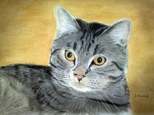 """""""Sammy"""" Pastell auf Tonpapier DIN A4 Format 10.2009"""