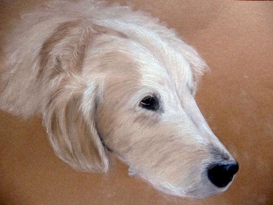 """""""Sam"""" Pastell auf Tonpapier 30x40 cm 10.2013"""