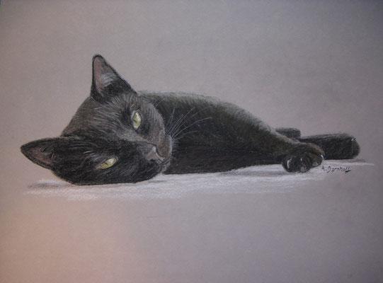 """""""Black Cat"""" Pastell auf Tonpapier 24x30 cm 10.2005"""