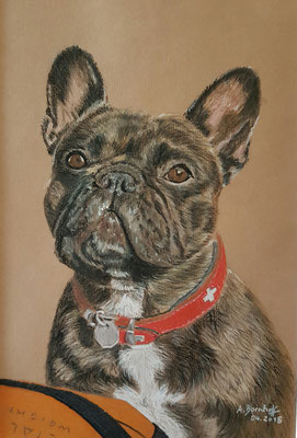 """""""Französische Bulldogge Malou"""" Pastell auf Künstlerpapier DinA4 Format 04.18"""
