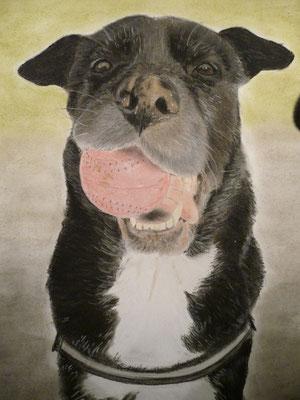 """Leila"" Pastell auf Tonpapier 40x30 cm 11.2013"