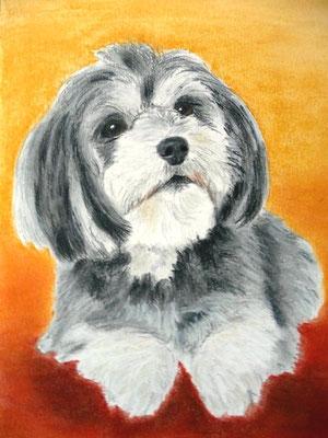 """""""Nellie"""" Pastell auf Tonpapier DIN A4 Format 02.2010"""