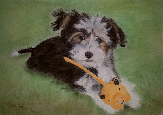 """Debby"" Pastell auf Tonpapier 20x30cm  05.2015"