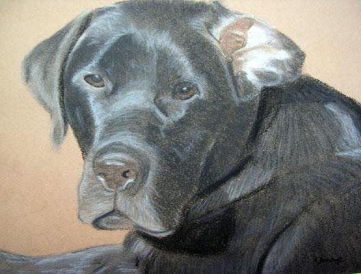 """Hennes"" Pastell auf Tonpapier 24x30 cm 11.2005"