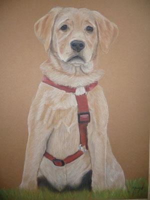 """Mila""  Pastell auf Tonpapier 30x40 cm 10.2012"