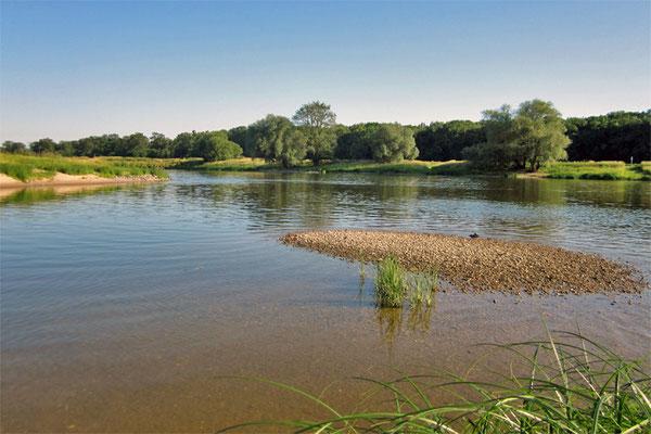 Biotopschutz Elbe / Foto: FÖLV