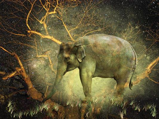 """Ganesha"", 60 x 40 cm, 330 €"
