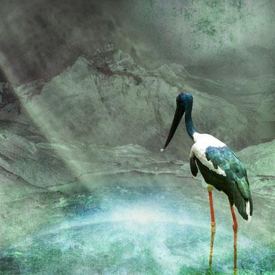 """""""Blauer Storch"""", 80 x 80 cm, 550 €"""