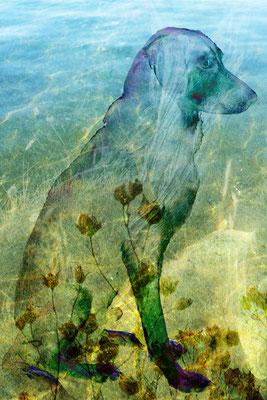 """""""Wasser, Erde, Licht und ein Hund"""", 40 x 60 cm, 330 €"""