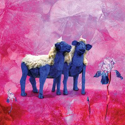 Verliebte Schafe