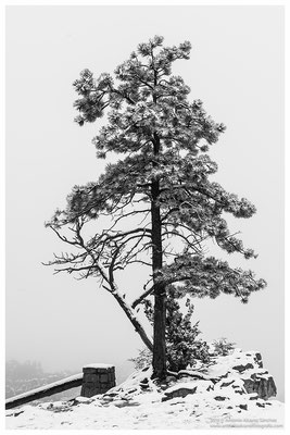 Ultimas nieves de primavera sobre Bryce Canyon  / Last spring snow on Bryce Canyon