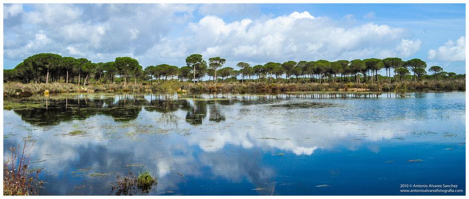Reflejos en la Laguna del rio Oro  /  Reflections in Gold River Lagoon