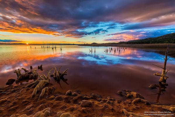 Naturaleza muerta  /  Still life
