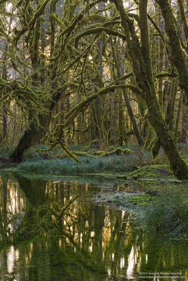 El bosque encantado  /  The forest enchanted