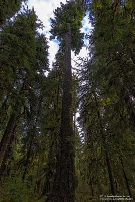 Grandes arboles  / Big trees