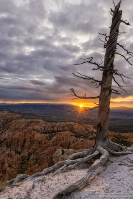 Primeros rayos de sol en Bryce Cañon  / First rays of sun over Bryce Canyon